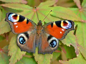 papillon peur parler public vaincre trac